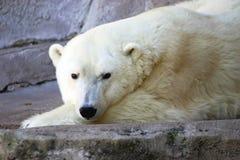 Giorno che sogna orso Fotografia Stock Libera da Diritti