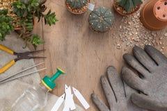 Giorno crescente del cactus Fotografia Stock