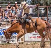Giorno del rodeo fotografia stock libera da diritti