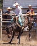 Giorno del rodeo Fotografia Stock