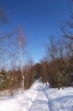 Giorno del sole di inverno Fotografie Stock Libere da Diritti