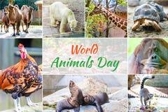 Giorno dell'animale del mondo Fotografia Stock Libera da Diritti