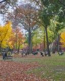 Giorno dell'autunno dell'iarda di Harvard Fotografia Stock