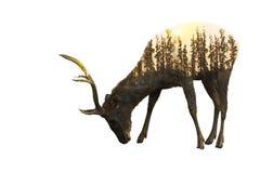 Giorno della fauna selvatica del mondo ambientale e concetti della fauna selvatica illustrazione di stock
