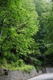 Giorno della foresta della primavera lungo la strada Fotografia Stock