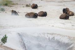 Giorno della stazione termale del bisonte Immagini Stock Libere da Diritti