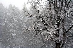 Giorno dello Snowy fotografia stock libera da diritti