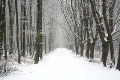 Giorno dello Snowy Fotografie Stock