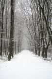 Giorno dello Snowy Immagini Stock Libere da Diritti