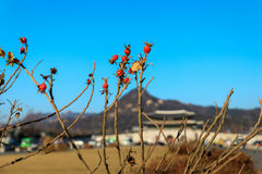Giorno di autunno alla plaza di Gwanghwamun Fotografie Stock Libere da Diritti