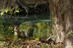 Giorno di autunno dello scoiattolo nei parchi nazionali degli Stati Uniti Fotografie Stock Libere da Diritti