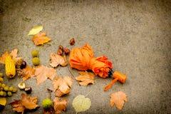Giorno di autunno - giorno piovoso Fotografia Stock