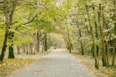 Giorno di autunno, molte foglie cadute, traccia del percorso sulle periferie del parco stagioni Vecchio stile d'annata Nostalgia, Fotografia Stock Libera da Diritti