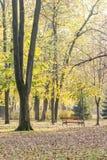 Giorno di autunno nel parco con le foglie cadute e un banco di legno Immagini Stock