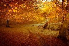Giorno di autunno nella foresta di Dyrehaven vicino a Copenhaghen, Danimarca Fotografie Stock Libere da Diritti