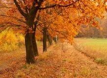 Giorno di autunno nella sosta Fotografia Stock Libera da Diritti