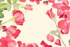 Giorno di biglietti di S. Valentino con le rose ed il fondo dei cuori Immagine Stock