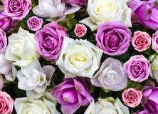 Giorno di biglietti di S. Valentino di amore del fondo della natura del fiore di Rosa Immagine Stock