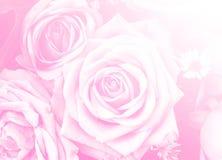 Giorno di biglietti di S. Valentino di amore di progettazione del fondo della natura del fiore di Rosa per il DES Immagine Stock Libera da Diritti