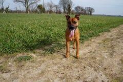 Giorno di cane Fotografia Stock Libera da Diritti
