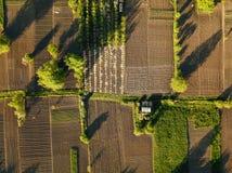 Giorno di estate del campo di agricoltura di vista aerea Immagini Stock