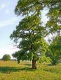 Giorno di estate o albero del fairy immagine stock libera da diritti