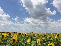 Giorno di estate pieno di sole Fotografia Stock Libera da Diritti