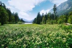 Giorno di estate soleggiato stupefacente sul lago Hintersee Immagine Stock Libera da Diritti