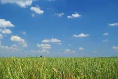 Giorno di estate sul campo (fuoco su erba) Immagini Stock