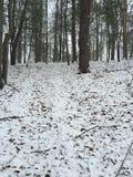 Giorno di inverni Fotografia Stock