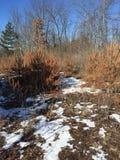 Giorno di inverni Fotografie Stock