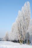 Giorno di inverno. fotografie stock libere da diritti