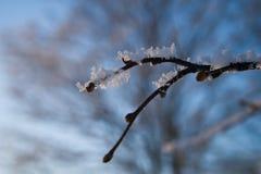 Giorno di inverno Immagini Stock Libere da Diritti