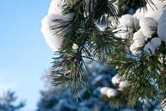 Giorno di inverno Fotografia Stock