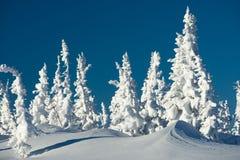 Giorno di inverno Fotografie Stock