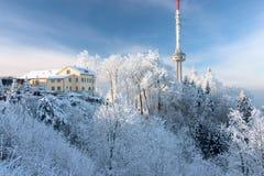 Giorno di inverno con gli alberi coperti di bianco Fotografie Stock Libere da Diritti