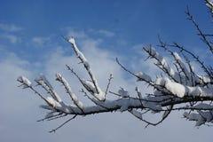Giorno di inverno croccante Bello cielo blu Fotografie Stock Libere da Diritti