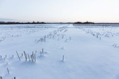 Giorno di inverno freddo Fotografia Stock Libera da Diritti