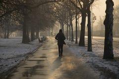 Giorno di inverno freddo Fotografie Stock