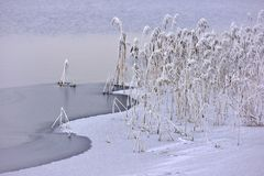 Giorno di inverno freddo e nebbioso con grande luce Piante di Snowy Fotografia Stock