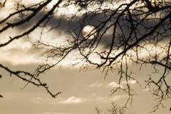 Giorno di inverno freddo in un cielo ed in una siluetta tempestosi di un albero Immagini Stock Libere da Diritti