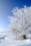 Giorno di inverno Frosty Tree Blue Sky Immagini Stock
