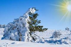 Giorno di inverno gelido fotografia stock libera da diritti