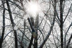 Giorno di inverno innevato degli alberi Immagine Stock Libera da Diritti