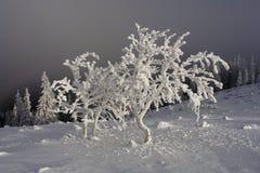 Giorno di inverno luminoso nelle montagne immagine stock