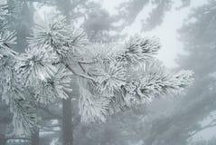 Giorno di inverno nebbioso immagine stock