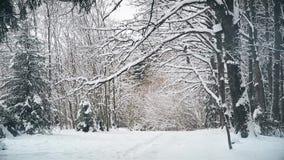 Giorno di inverno nel boschetto della quercia dopo le precipitazioni nevose a dicembre stock footage