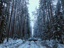 Giorno di inverno nella foresta fotografie stock