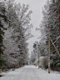 Giorno di inverno nella foresta fotografie stock libere da diritti