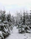 Giorno di inverno nella foresta fotografia stock